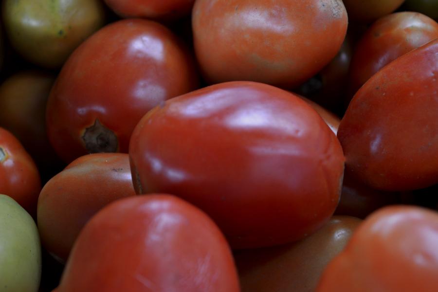 Tomate tem queda histórica no preço