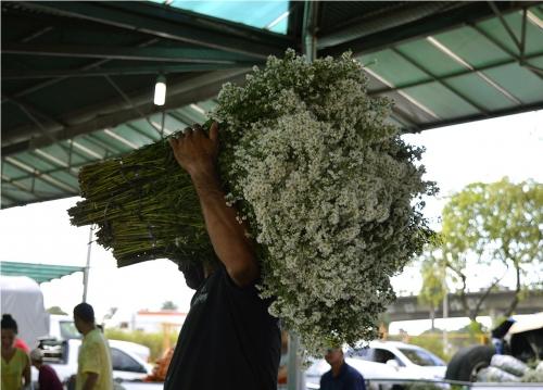 Feira de Flores Especial de Finados acontecerá na próxima quinta-feira